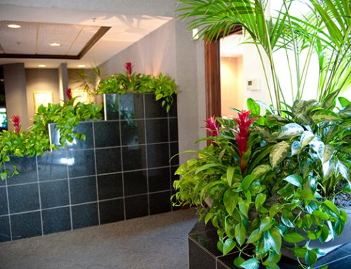 Sustainable Green Architecture – The Role of In Door Plants